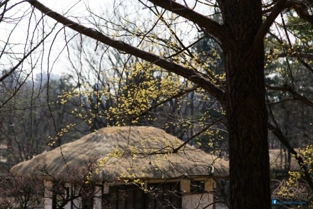 Traditional Korean Huts in KFV