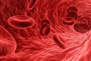вязкость крови