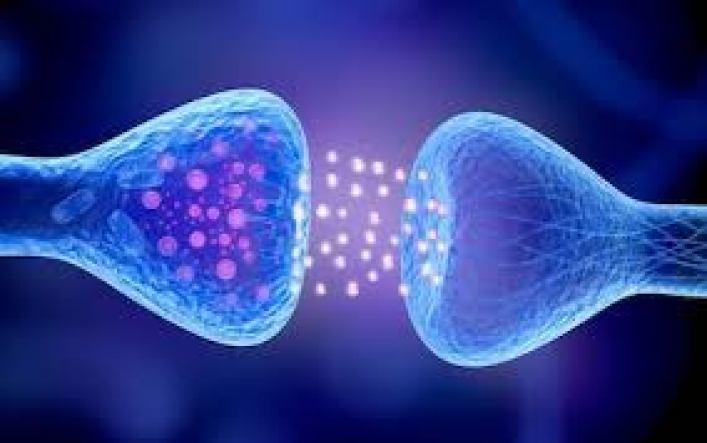 гормон адреналин нейромедиатор