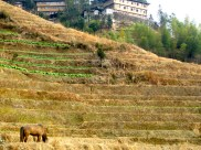 Next morning, I got up early to go to the Longji Rice Terraces