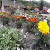 Flori de la Edil Sal Prest, pentru bucuria cetățenilor din orașul Petrila