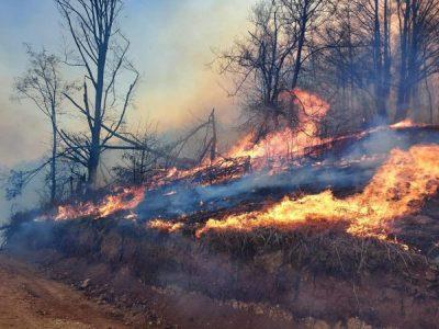 Ard pădurile în județul Hunedoara !