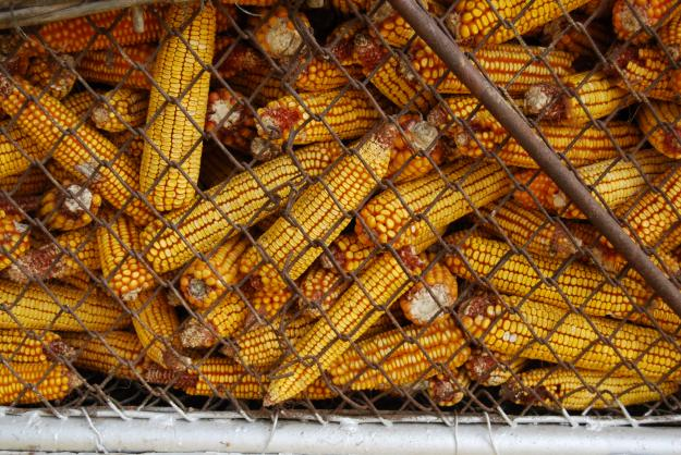 România a intrat pe excedent în comerțul cu produse agroalimentare, după primele trei trimestre din 2015