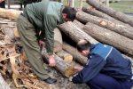 Tăieri ilegale şi furt de material lemnos