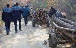Dosare penale pentru tăiere ilegală de arbori și furt de material lemnos