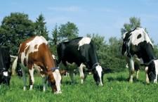 21 septembrie, termen limită de depunere a cererii de plată pentru fermierii din zonele defavorizate
