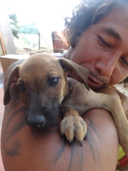 puppy cuddles