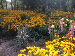 img_0921 Ogród wlesie - Sumin