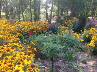 img_0923 Ogród w lesie. Sumin