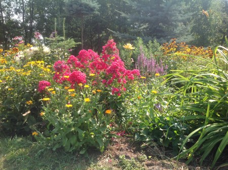 img_0946 Ogród wlesie - Sumin
