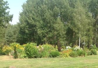 img_0950 Ogród w lesie. Sumin