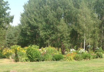 img_0950 Ogród w lesie - Sumin