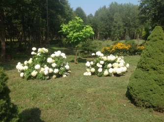 img_0955 Ogród wlesie - Sumin