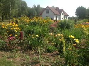 img_0995 Ogród wlesie - Sumin