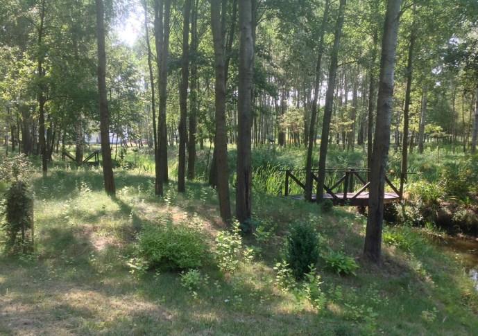 img_1045 Ogród w lesie. Sumin
