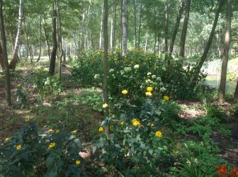 img_1075 Ogród w lesie. Sumin