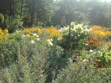 img_1088 Ogród w lesie - Sumin