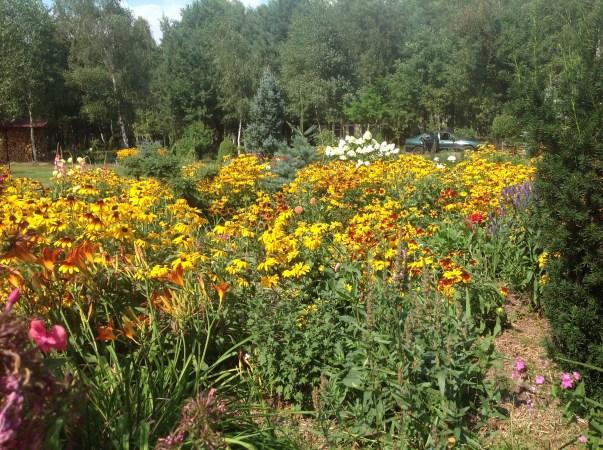 img_1097 Ogród wlesie - Sumin