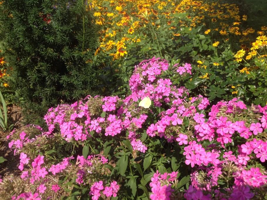 img_1098 Pierwsze kwiaty wiosny