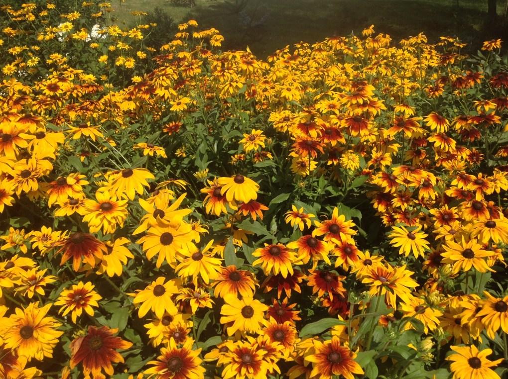 img_1103 Pierwsze kwiaty wiosny.