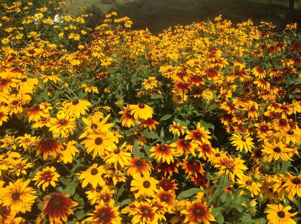 img_1103 Pierwsze kwiaty wiosny