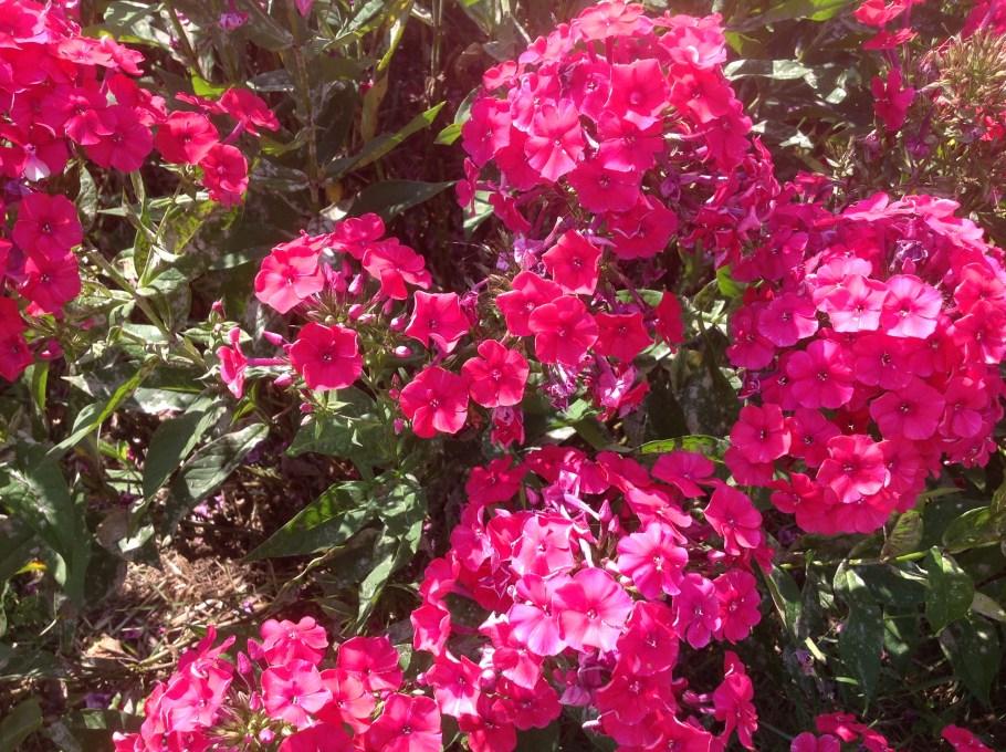 img_1116 Pierwsze kwiaty wiosny