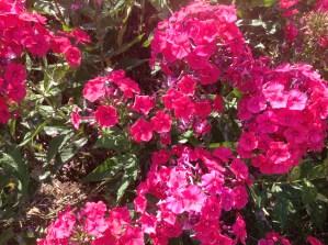 img_1116 Ogród wlesie - Sumin