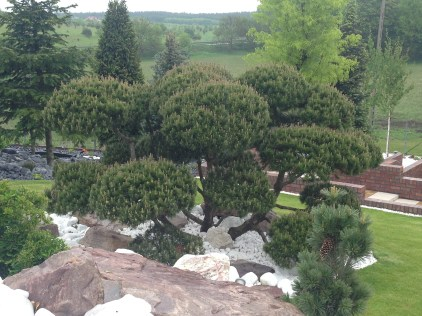 img_5255 Kaskadowy ogród w Pawłówku