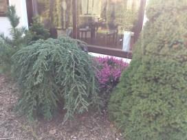img_6288 Klasyka ogrodu. Classic garden.