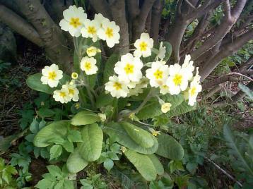 nature01464 Jakie rośliny jako pierwsze budzą się na wiosnę?