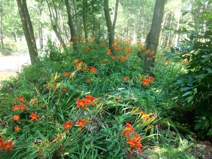 ogrc3b3d-naturalny-w-sumienie_00006 Ogród w lesie. Sumin