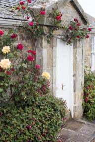 rose_cottage_door Wiosenne cięcie róż