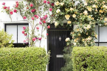 Cottage door with trailing red and yellow roses forming a decorative arch over the wall viewed between two neat trimmed hedges