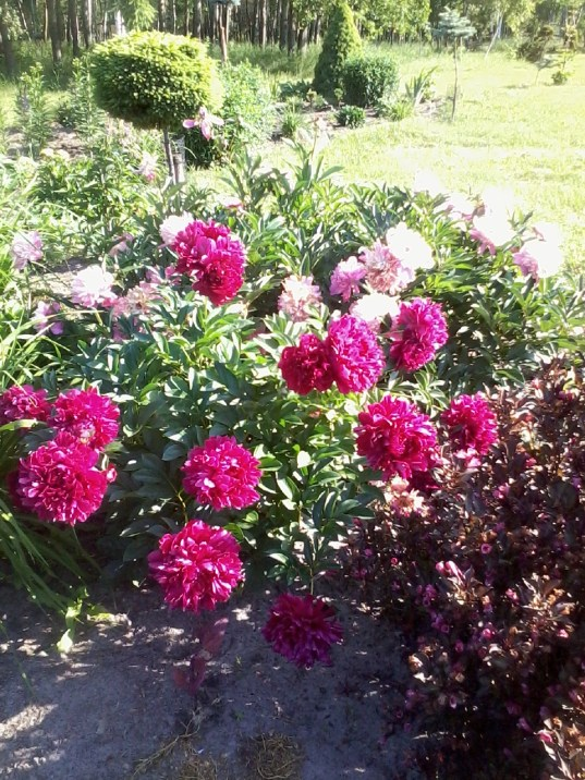 zdjc499cie0009 Pierwsze kwiaty wiosny.