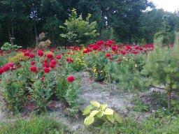 zdjc499cie0205 Ogród wlesie - Sumin