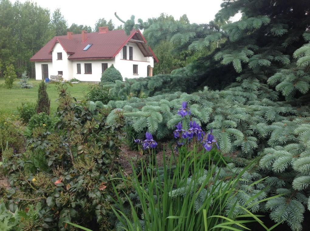img_2161 Pierwsze kwiaty wiosny
