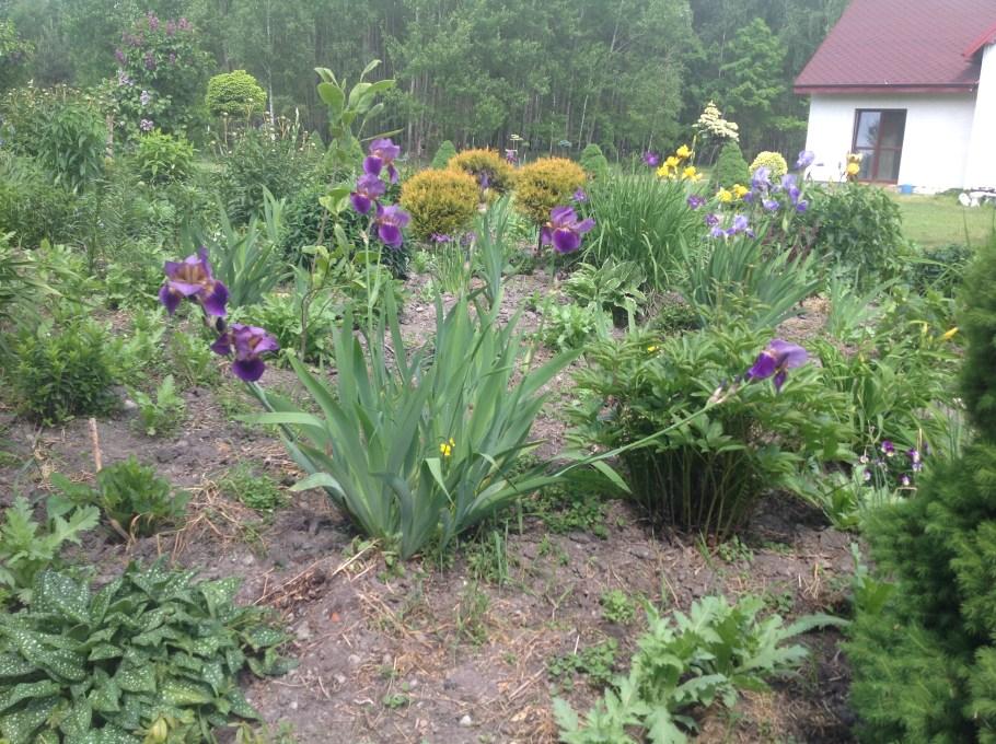 img_2179 Pierwsze kwiaty wiosny