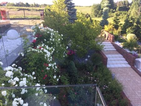 img_6429 Ogród jak zobrazka