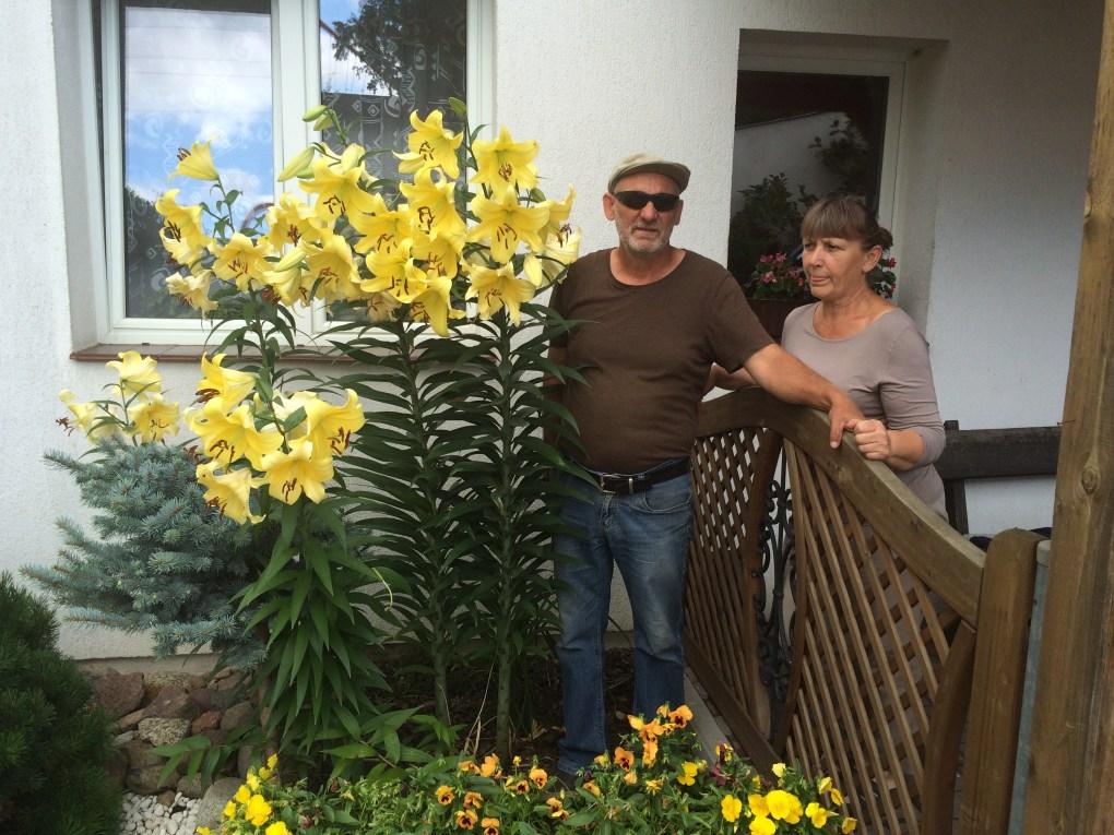 img_6731 Rozmnażanie lilii