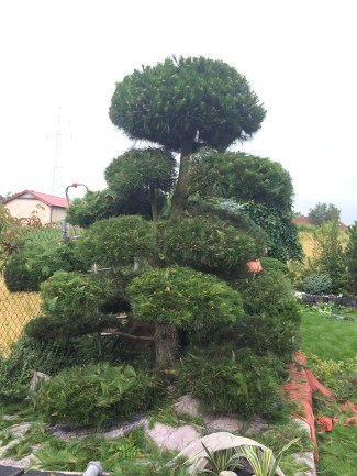 img_8582 Ogród jak zobrazka