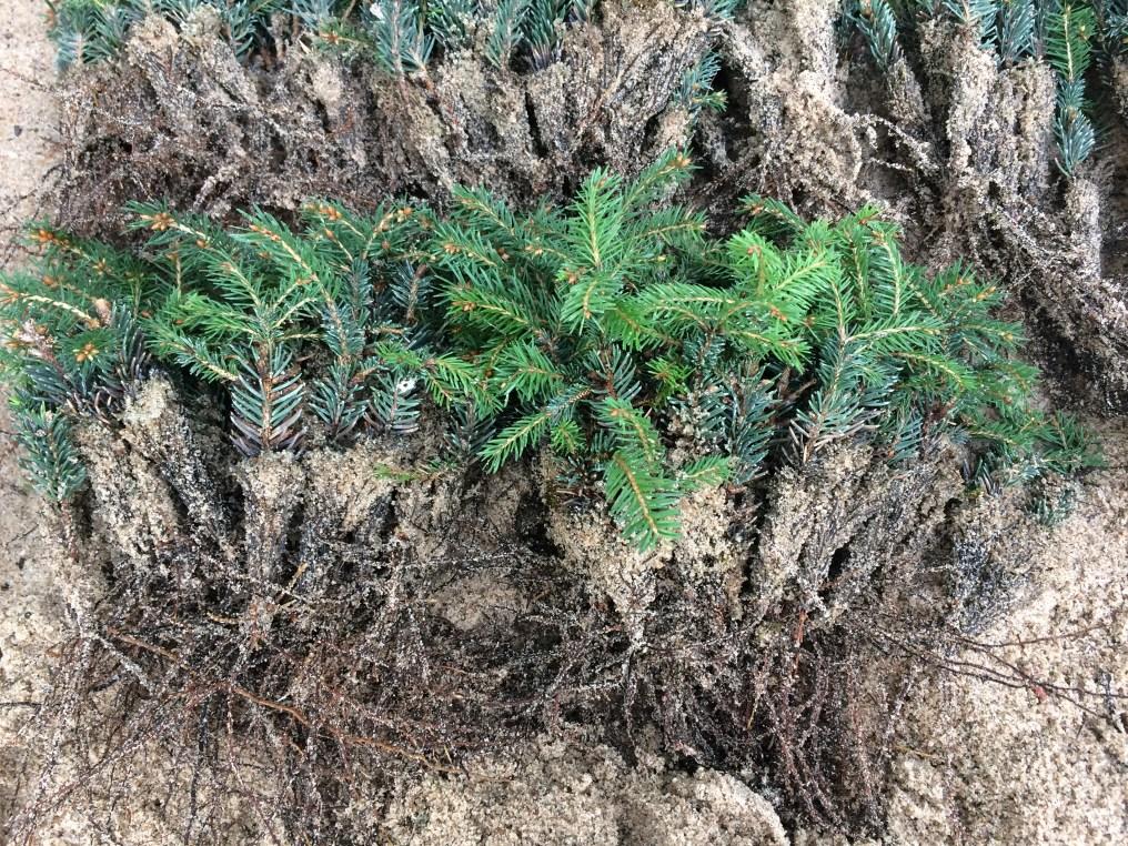 img_91341 Warsztaty z rozmnażania roślin