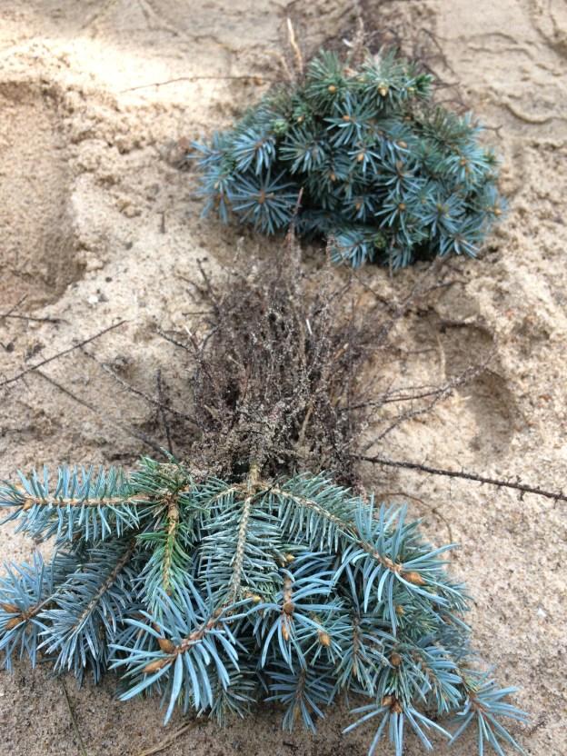 img_91361 Warsztaty zrozmnażania roślin