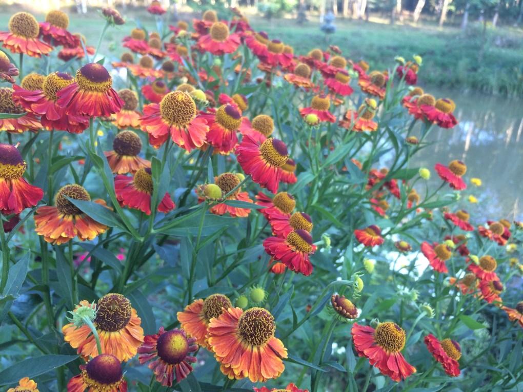 dzielc5bcan Kwiaty jesieni