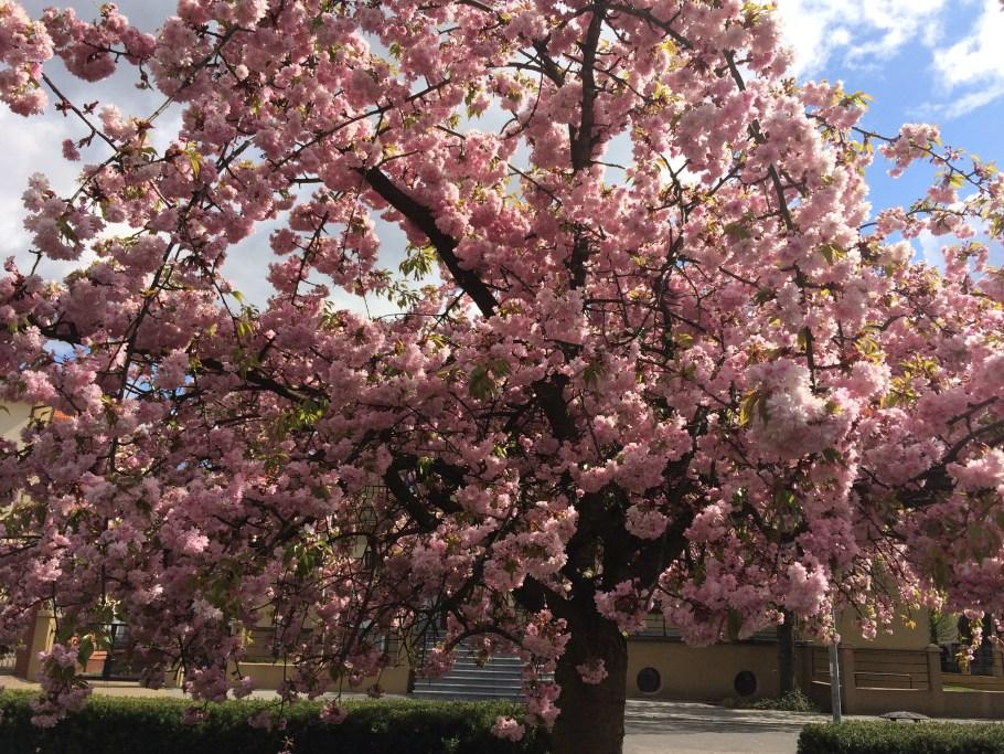 img_6319 Warsztaty zeszczepienia drzew ikrzewów #zielonepogotowie #szczepienie