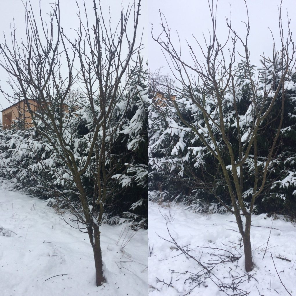 7500970d-facb-44e8-a561-a703018e96aa Cięcie drzew owocowych. Kiedy ijak torobić?