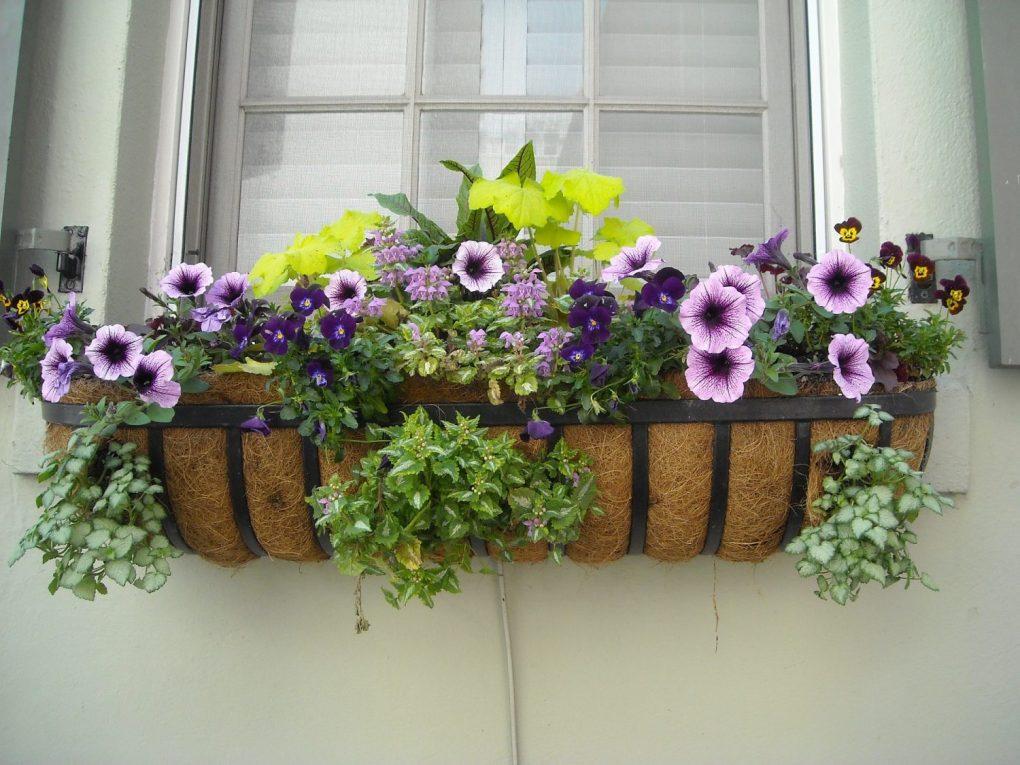 window-box-891985_1920 Rośliny w donicach