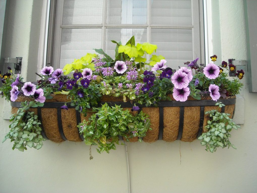 window-box-891985_1920 Rośliny wdonicach również wogrodzie