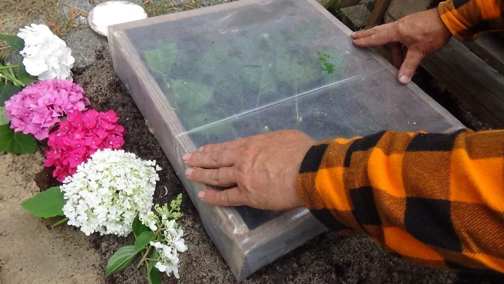 dsc02057 Przygotowanie podłoża do ukorzeniania roślin
