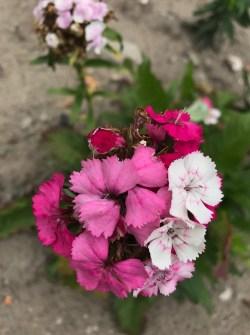 img_1813 Jak pozyskać nasiona kwiatów?