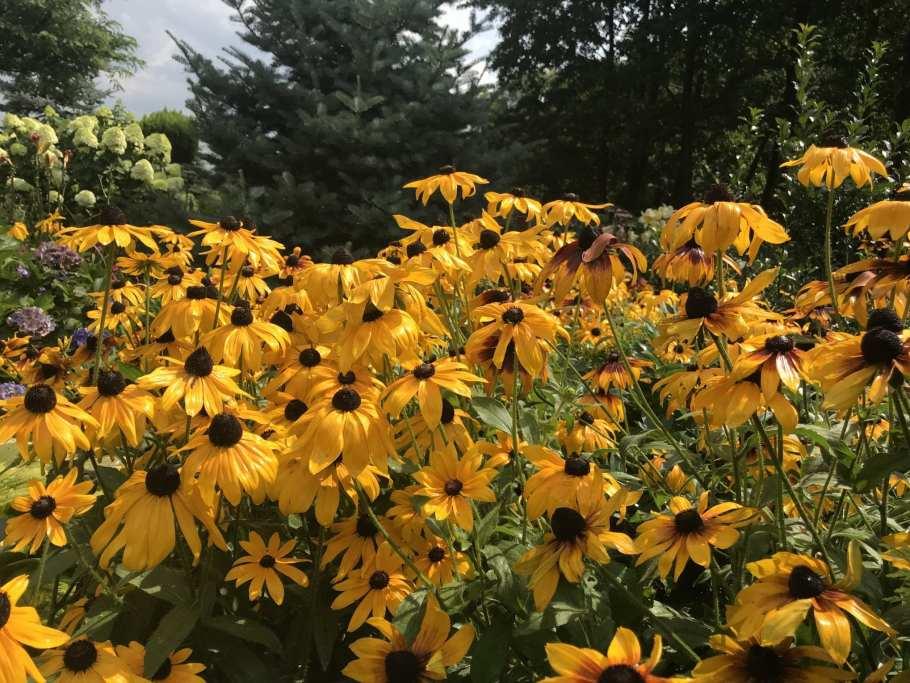 img_2377 Jak pozyskać nasiona kwiatów?